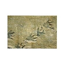 Dinosaur footprint fossils - Rectangle Magnet
