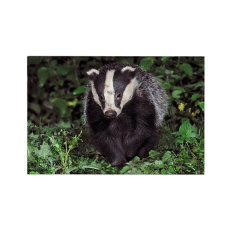 European badger - Rectangle Magnet