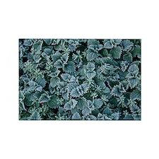 Frost on nettles - Rectangle Magnet