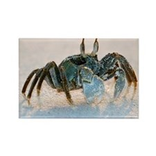 Ghost crab on sand - Rectangle Magnet