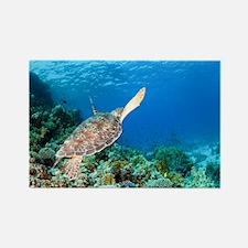 Green sea turtle - Rectangle Magnet