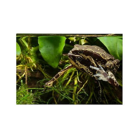 Harlequin toads mating - Rectangle Magnet