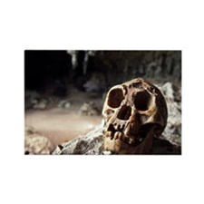 Homo floresiensis skull - Rectangle Magnet