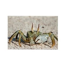Horned ghost crab - Rectangle Magnet
