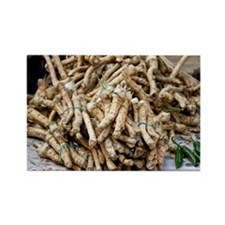 Horseradish roots - Rectangle Magnet