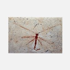 Lacewing fossil - Rectangle Magnet