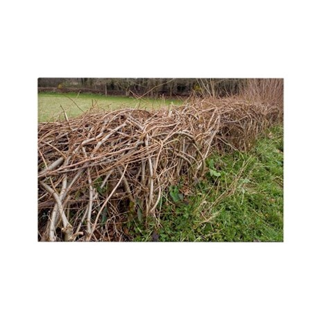 Laid hedgerow - Rectangle Magnet