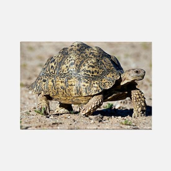 Leopard tortoise - Rectangle Magnet