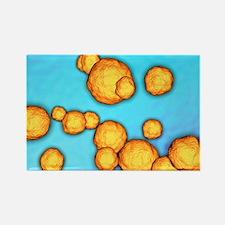 MRSA bacteria, artwork - Rectangle Magnet