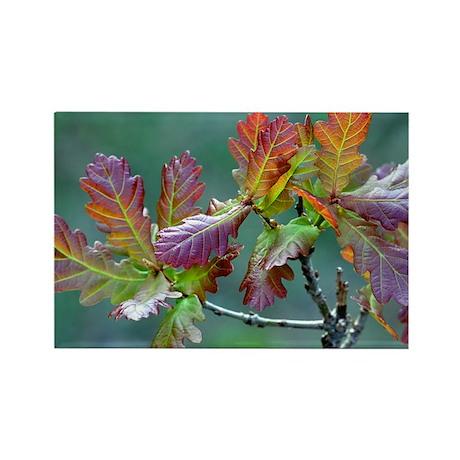 Oak (Quercus sp.) - Rectangle Magnet