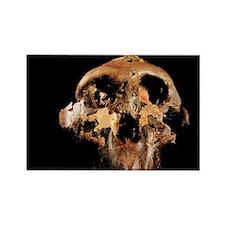 Paranthropus boisei skull - Rectangle Magnet