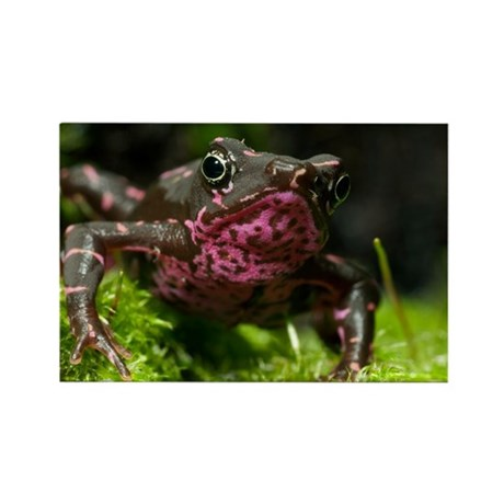 Poisonous toad - Rectangle Magnet