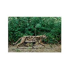 Prehistoric cat, artwork - Rectangle Magnet