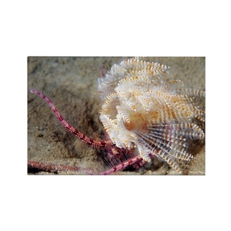 Polychaete marine worm - Rectangle Magnet