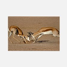 Springboks fighting - Rectangle Magnet
