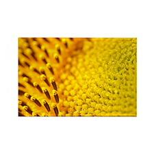 Sunflower - Rectangle Magnet
