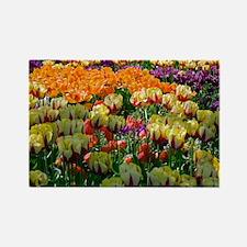 Tulip (Tulipa sp.) borders - Rectangle Magnet