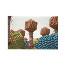 Viruses, artwork - Rectangle Magnet