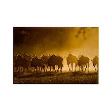 Wildebeest herd - Rectangle Magnet
