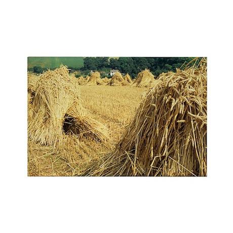 Wheat sheaves - Rectangle Magnet