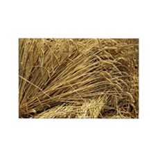 Wheat sheaves - Rectangle Magnet