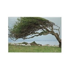 Wind-blown tree - Rectangle Magnet