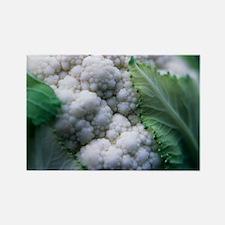 Cauliflower - Rectangle Magnet
