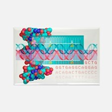 DNA analysis - Rectangle Magnet