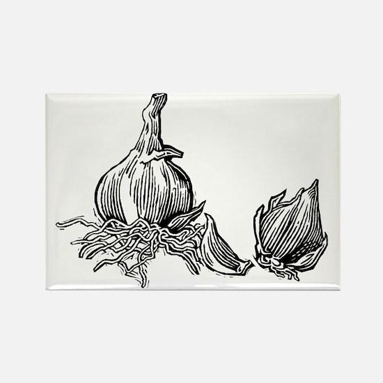 Bulbs of garlic, woodcut - Rectangle Magnet