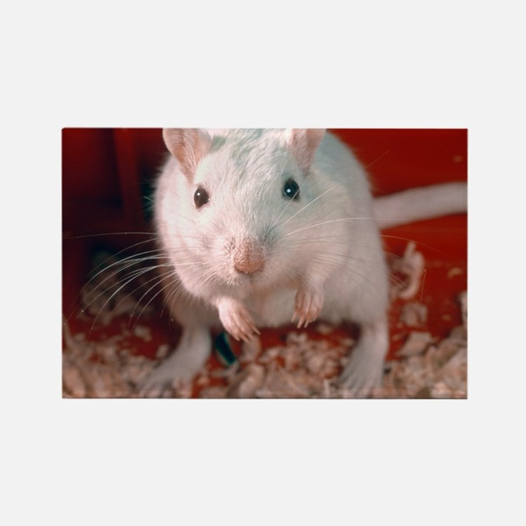 Laboratory gerbil - Rectangle Magnet