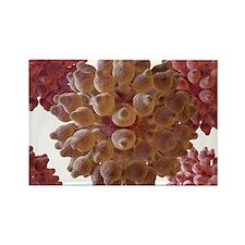 , artwork - Rectangle Magnet