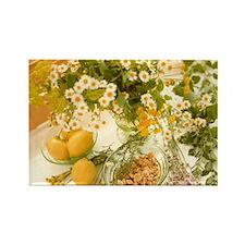 Medicinal plants - Rectangle Magnet