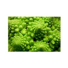 Romanesco cauliflower head - Rectangle Magnet