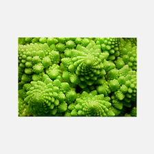 Romanesco cauliflower head - Rectangle Magnet
