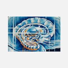 Brain limbic system - Rectangle Magnet