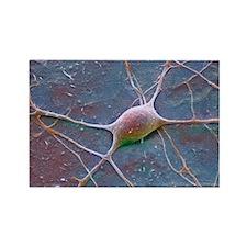 Purkinje nerve cell, SEM - Rectangle Magnet