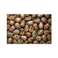 Seeds of the castor oil plant - Rectangle Magnet