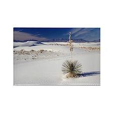 Soaptree yucca (Yucca elata) - Rectangle Magnet