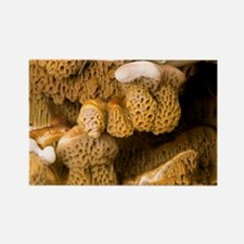 Dry rot fungus - Rectangle Magnet