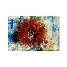 Beadlet anemone - Rectangle Magnet