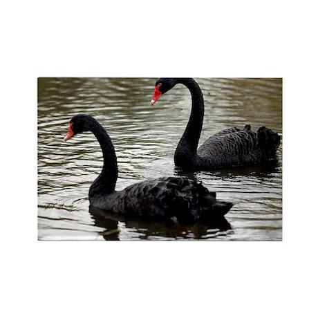 Black swans - Rectangle Magnet