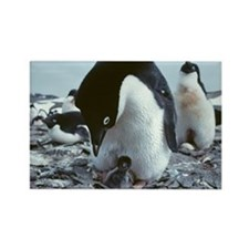 Adelie penguin with chick - Rectangle Magnet