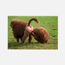 Baboons grooming - Rectangle Magnet