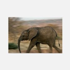 African elephant - Rectangle Magnet