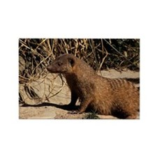 Banded mongoose - Rectangle Magnet