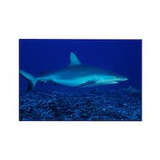 Bull shark - Rectangle Magnet