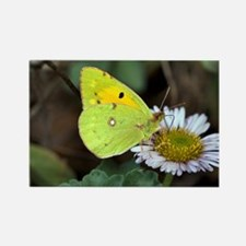 Clouded yellow butterfly - Rectangle Magnet