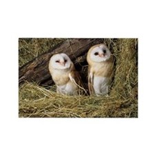 Barn owls - Rectangle Magnet