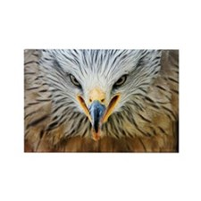 Common buzzard - Rectangle Magnet