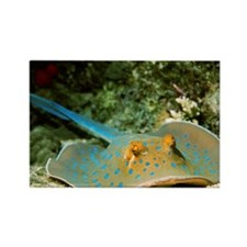 Blue-spotted fantail ray - Rectangle Magnet